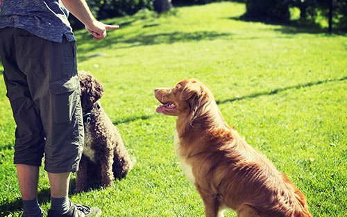 In-home Dog Training and Puppy Training in Vermont and NewHampshire