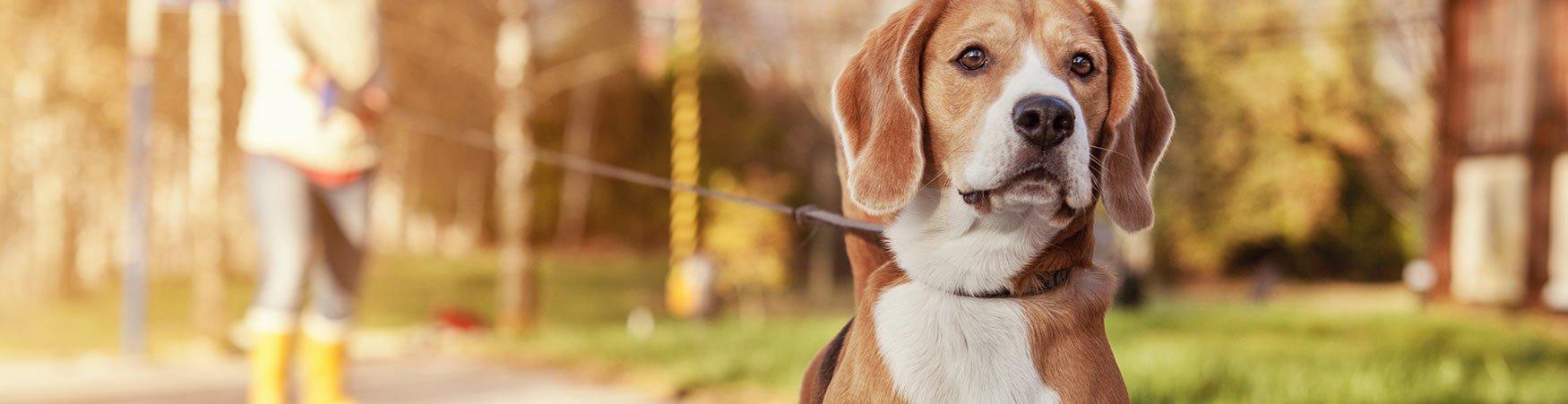 In-home Dog Training serves Dallas Texas