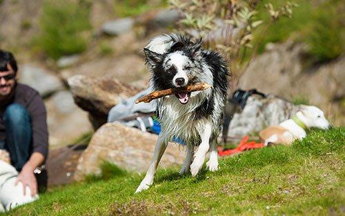 Dog Training Highland Park Il