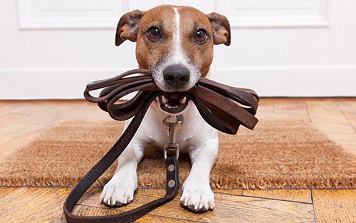 In-home dog training and in-home puppy training in Chester County and Delaware County