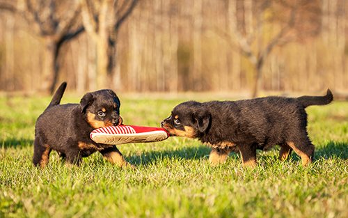Dog Training and Puppy Training in Orlando, Florida Region
