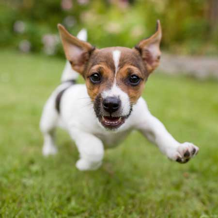 In-home Dog Training serves Austin Texas