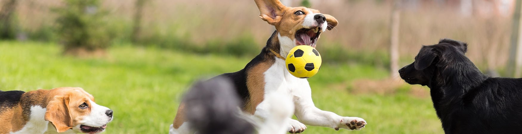 In-house dog and puppy training in Chadsford Pennsylvania