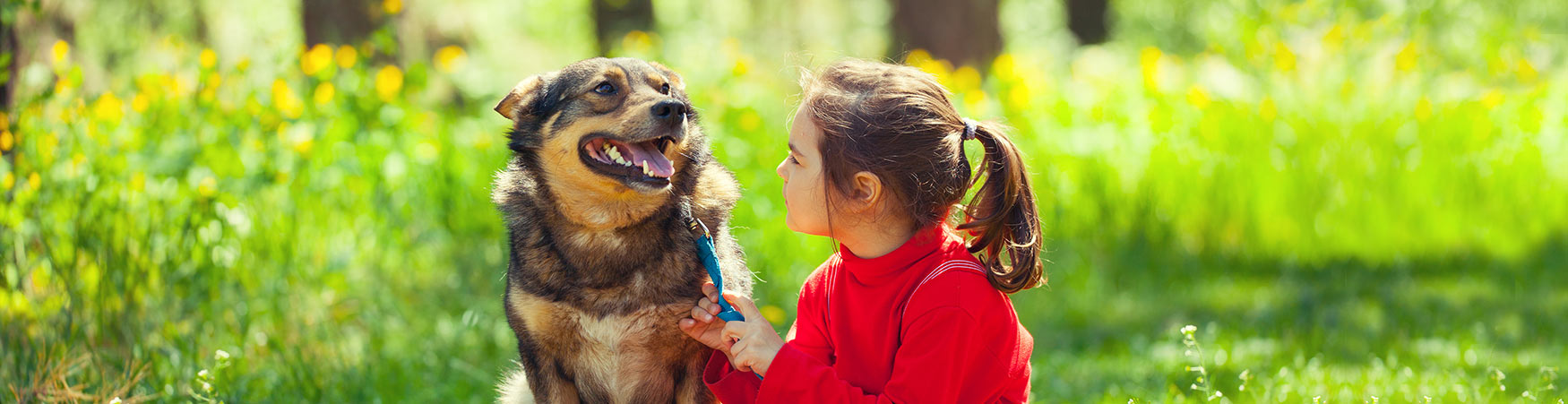 Dog Training in DuPage and Will County, Illinois