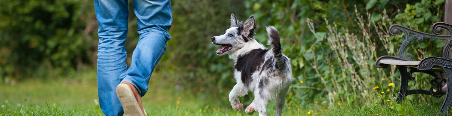 In-home Dog Training, In-home Puppy Training from Colorado Springs to Pueblo