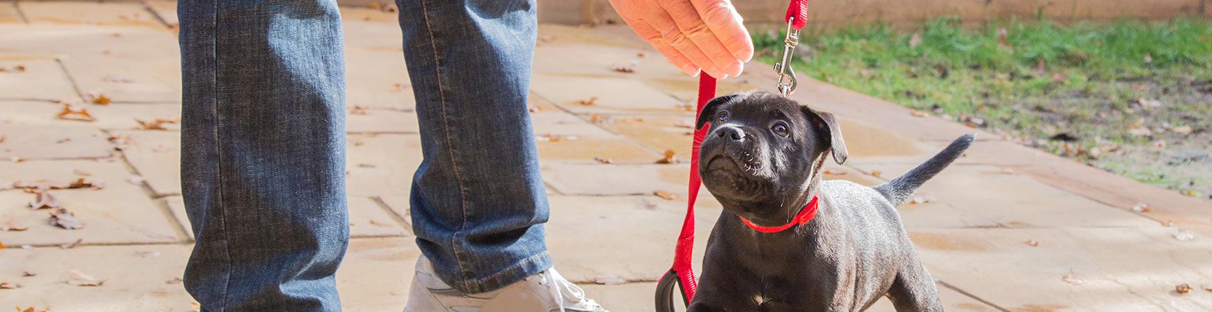 The Canine Dimensions Puppy GoodStart Program