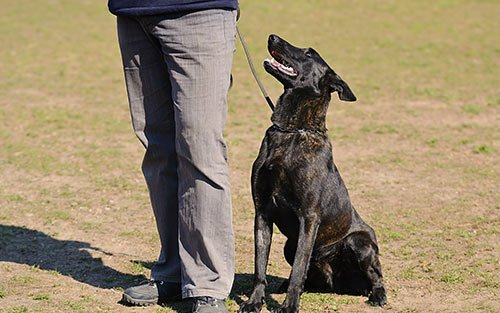 marlton, new jersey | south jersey dog training | canine dimensions