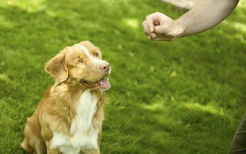 In-home Dog Training serves Kansas City