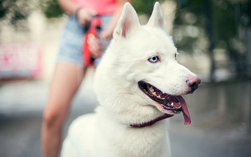 Dog Training and Puppy Training in Orange CountyCA