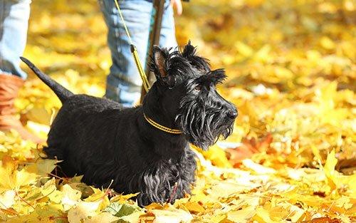 Charlotte Region Dog Training Canine Dimensions
