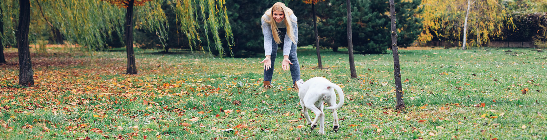 In-home Dog Training and Puppy Training in North Carolina Charlotte Region